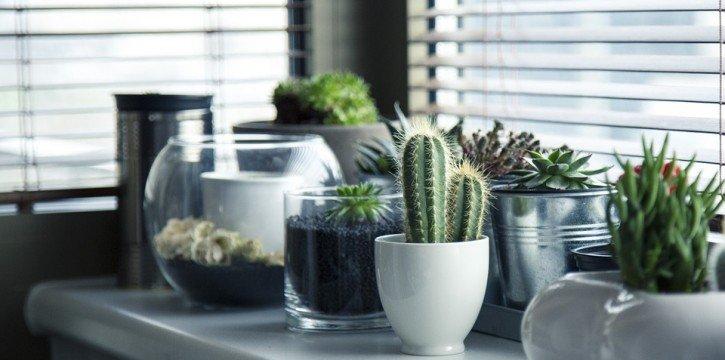 plants on a window ledge
